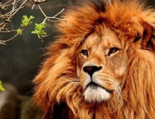 Le Soleil Le Lion La Maison V